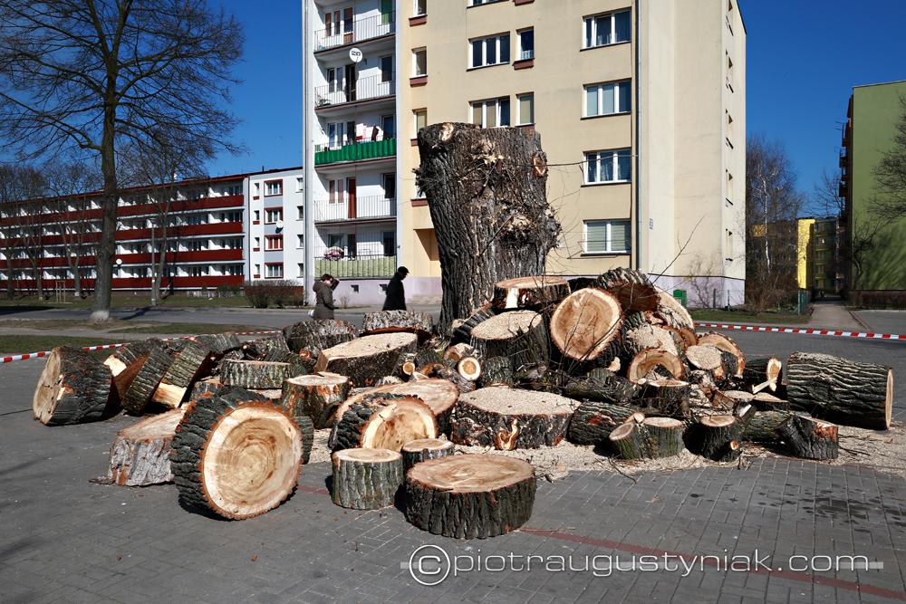 scięte drzewo