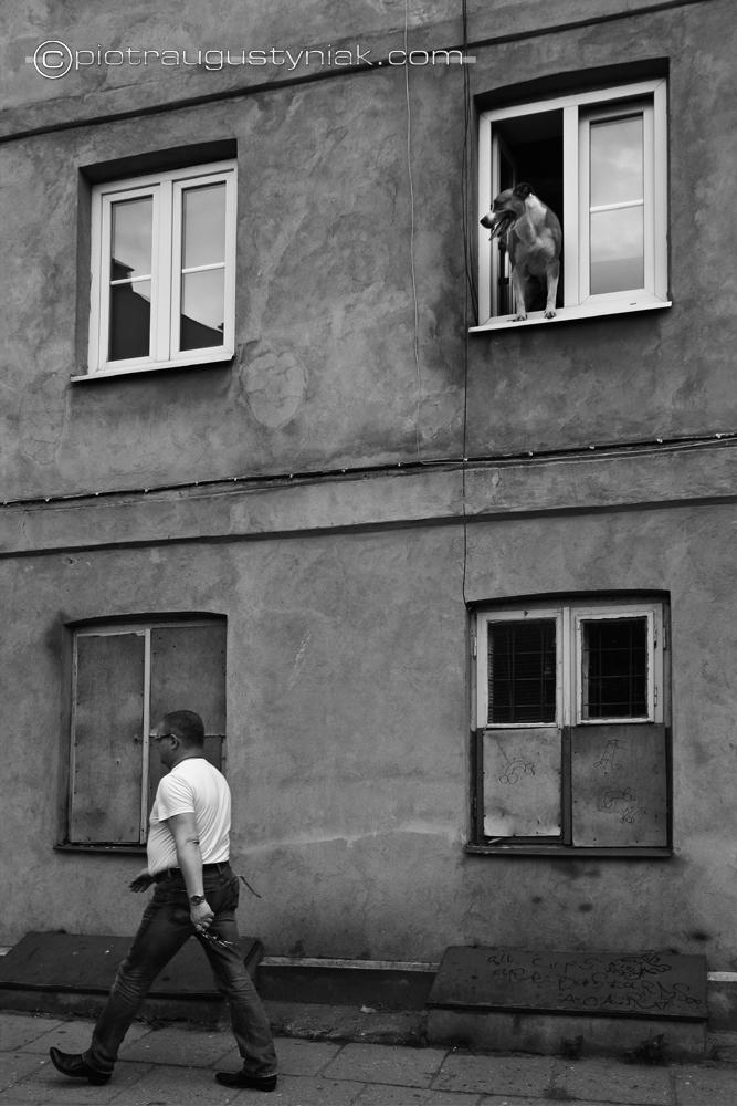 pies w oknie